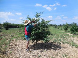 taille des arbres