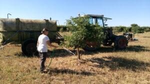 arrosage des arbres truffiers