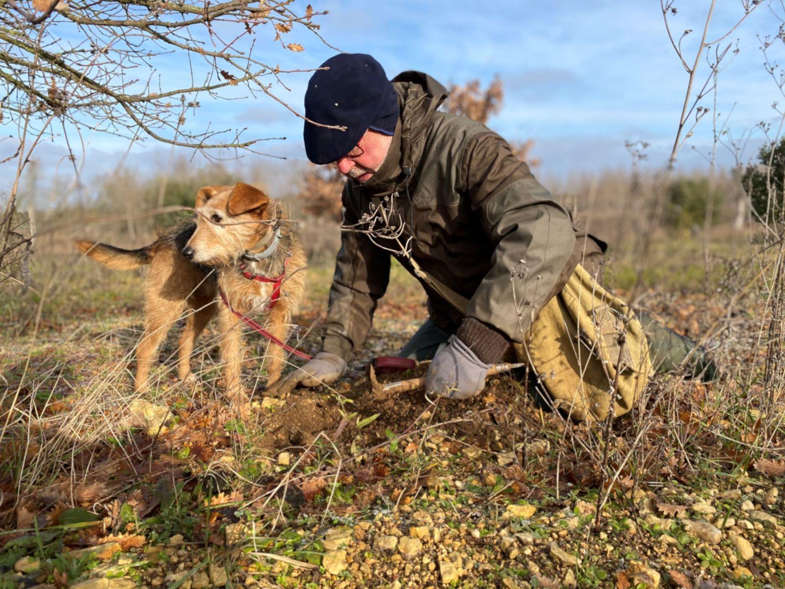 cavage des truffes
